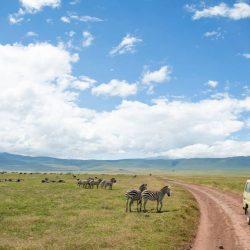 3670 - Safari découverte de la Tanzanie - 1