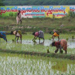 3708 - Volontariat en Inde du Sud au sein de la Tribu Irula - 1
