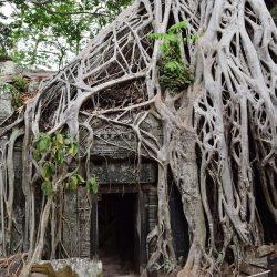 3556 - Carte postale du Cambodge - 1
