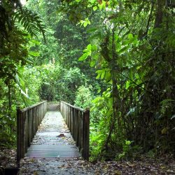 sarapiqui-rainforest-costa-rica
