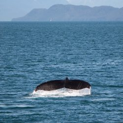 whale-watching-4430684_960_720